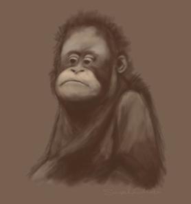 Gorilla Sketch Draft
