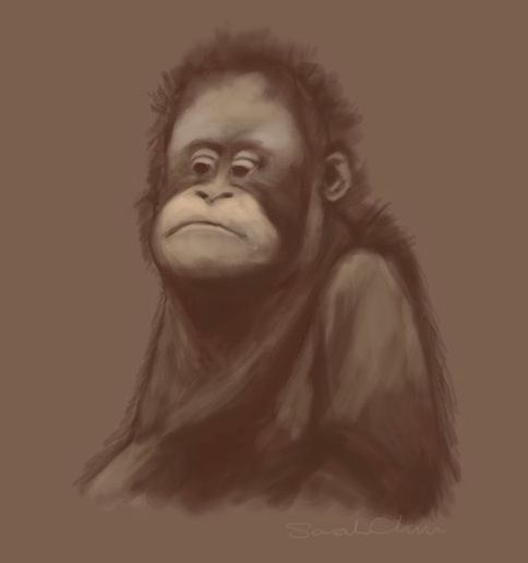 Gorilla Sketch Draft
