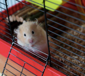 Sammi The Hamster