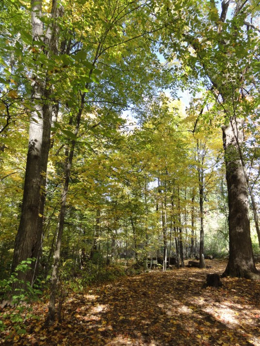 Kortright Centre for Conservation