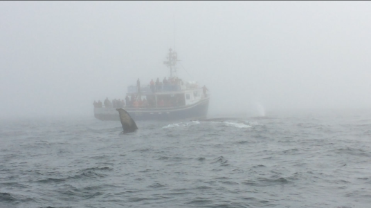 Whale Watching, Nova Scotia