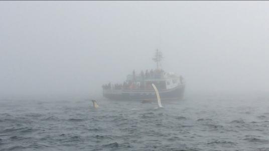 Whale Watching, Nova Scotia