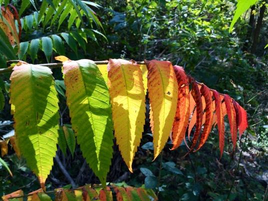 Fall colours, Canada