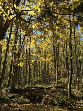 Terra Cotta Conservation Area, Ontario, Canada