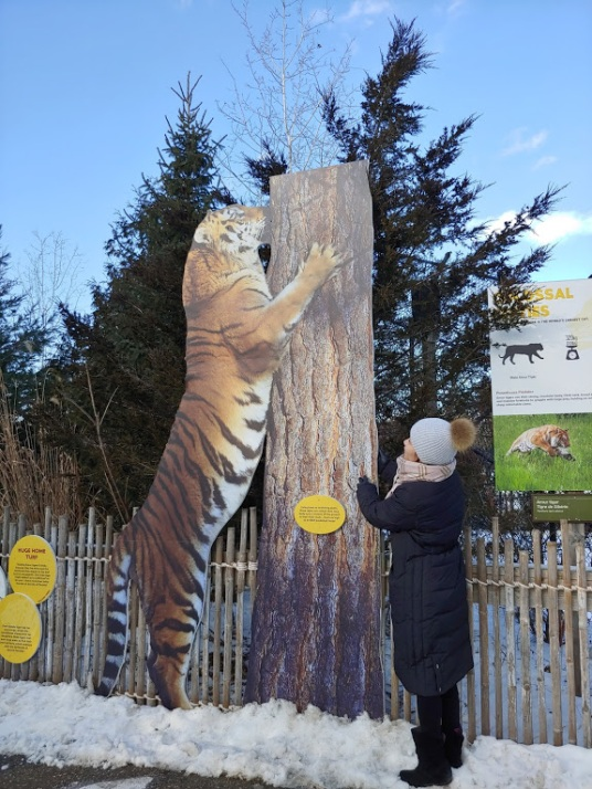 mural tiger exhibition at Toronto Zoo